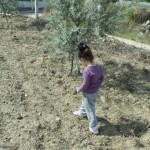 zeynep-zeytinlikte (1)