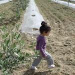 zeynep-zeytinlikte (2)