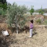 zeynep-zeytinlikte (3)