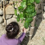 zeynep-zeytinlikte (6)