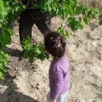 zeynep-zeytinlikte (7)